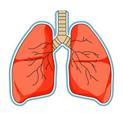 search results for lungs clip art pictures graphics rh classroomclipart com lungs clipart free download lungs clipart images