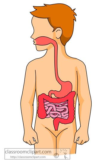 anatomy_digestive_system_organs.jpg