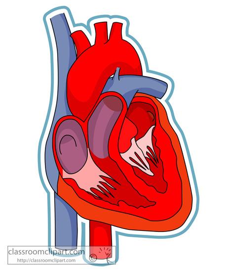 anatomy_heart.jpg
