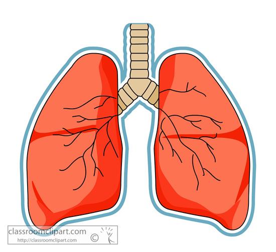 anatomy_lungs.jpg