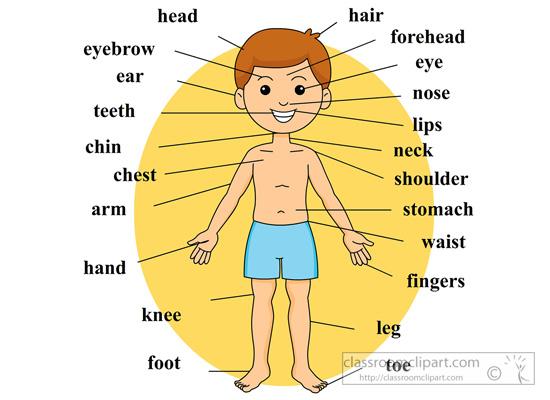 boy-body-anatomy-body-parts-labeled.jpg