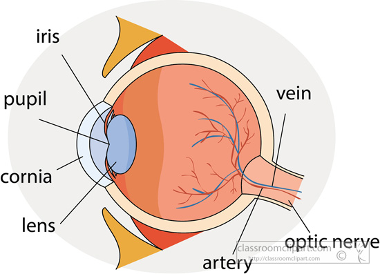 eye-anatomy-parts-labeled-clipart-1.jpg
