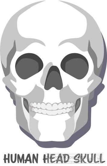 human-head-skull-clipart.jpg