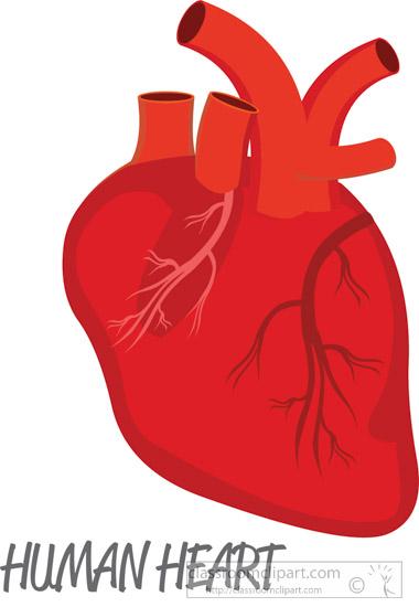 anatomy clipart human heart clipart classroom clipart rh classroomclipart com human heart clip art free human heart clipart outline