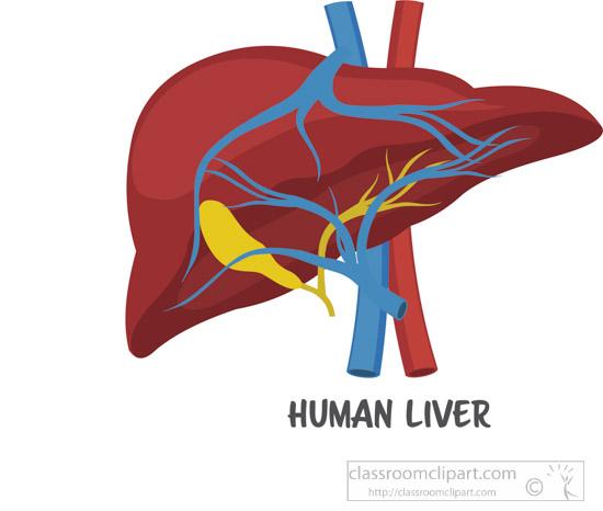 human-liver-clipart.jpg