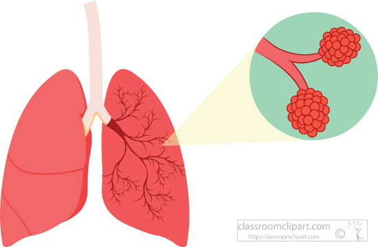 human-lungs-with-bronchus-aveoli-clipart.jpg