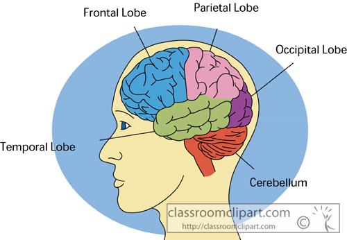human_brain_2613.jpg