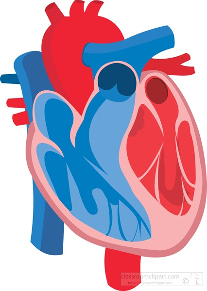 illustration-cross-section-of-human-heart-flat-design-clipart.jpg