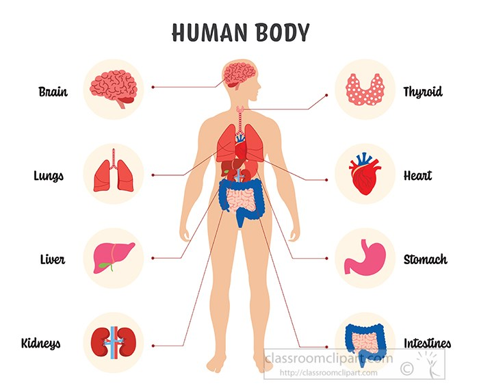 illustration-labeled-of-the-human-body-clipart-.jpg