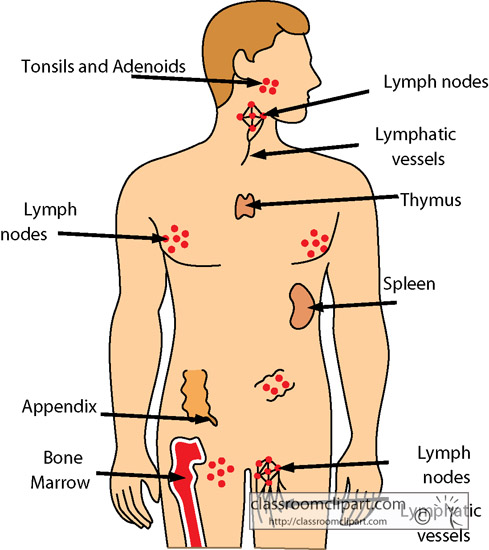 immune_system_1218.jpg