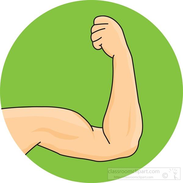 male-bicep-muscle.jpg