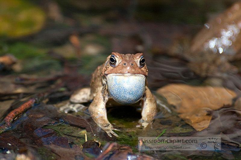 frog_4_10_12.jpg
