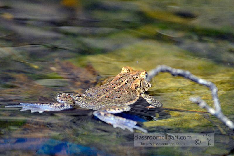 frog_4_10_13.jpg