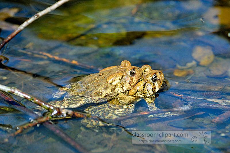 frog_4_10_15.jpg