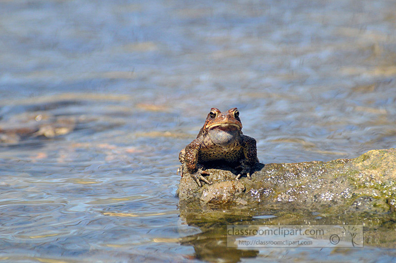 frog_4_10_18.jpg