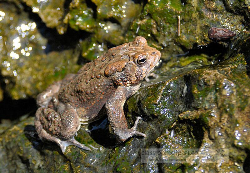frog_4_10_22.jpg