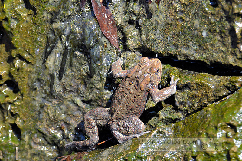 frog_4_10_23.jpg