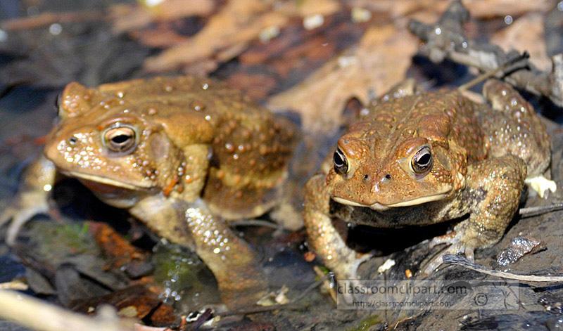 frog_4_10_30.jpg