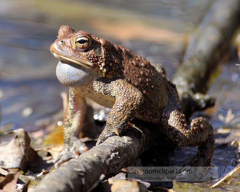 frog_4_10_32.jpg