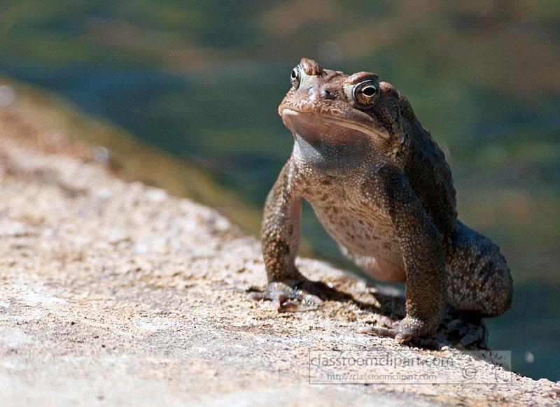 frog_4_10_51.jpg