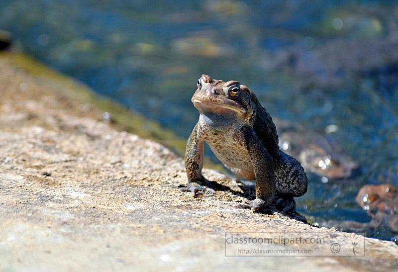 frog_4_10_52.jpg