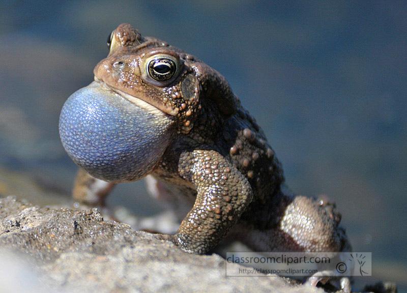 frog_4_10_53.jpg
