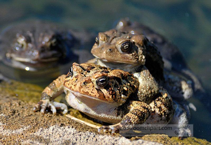 frog_4_10_54.jpg