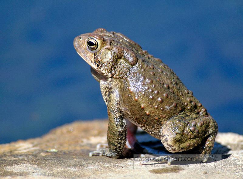 frog_4_10_56.jpg