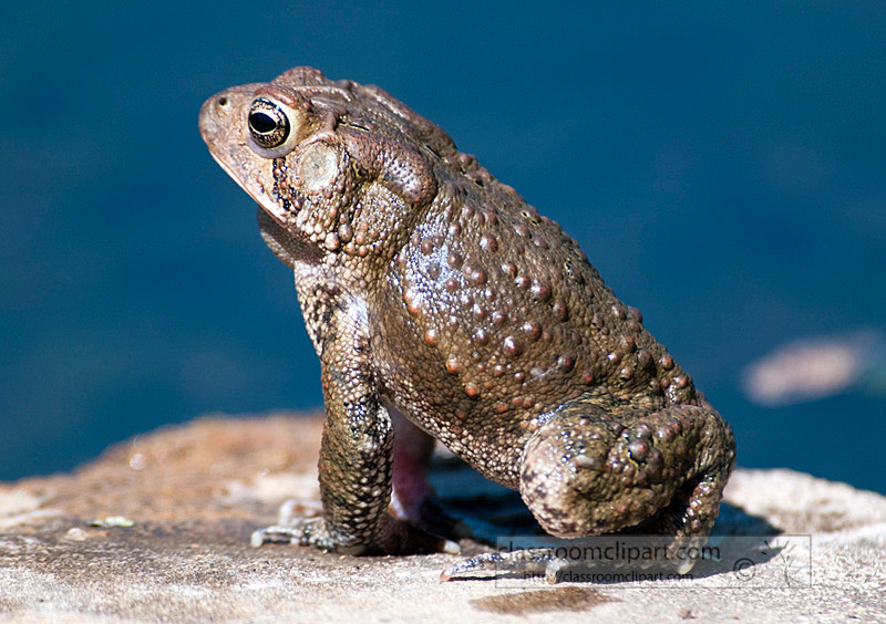 frog_4_10_57.jpg