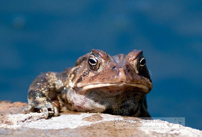 frog_4_10_58.jpg