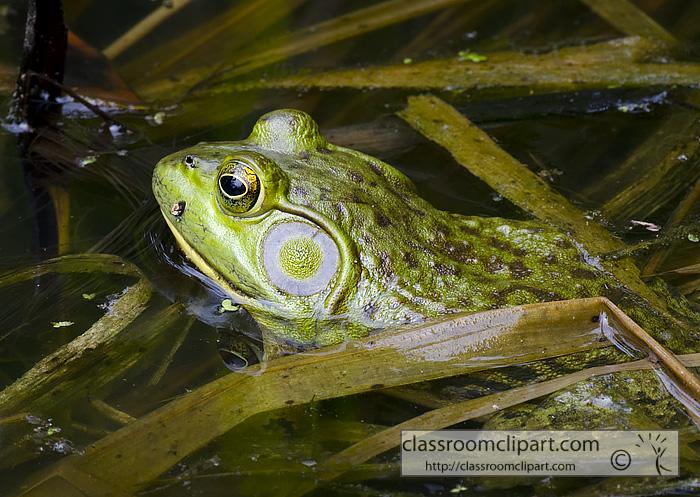 frog_side_view.jpg