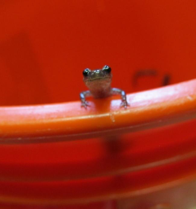 photo-of-salamander-on-rim-of-a-containter.jpg
