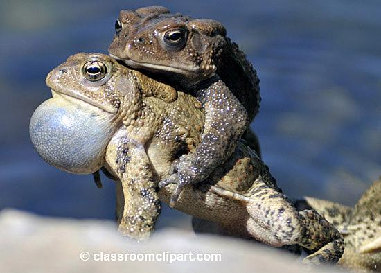 frog_4_10_46.jpg