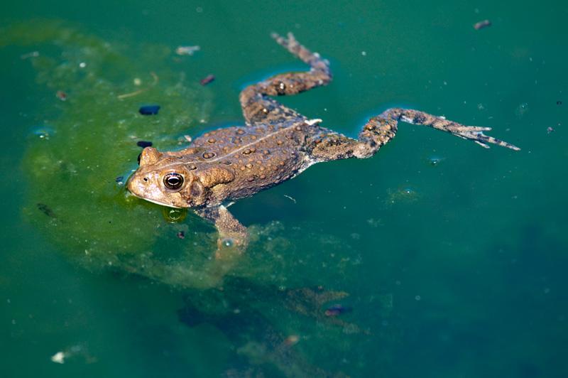 frog_4_10_61.jpg