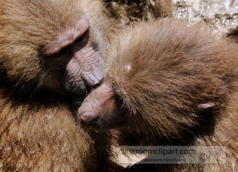 two_baboons_photo_7875b.jpg
