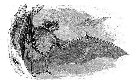 bat001.jpg