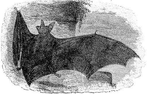 bat002.jpg