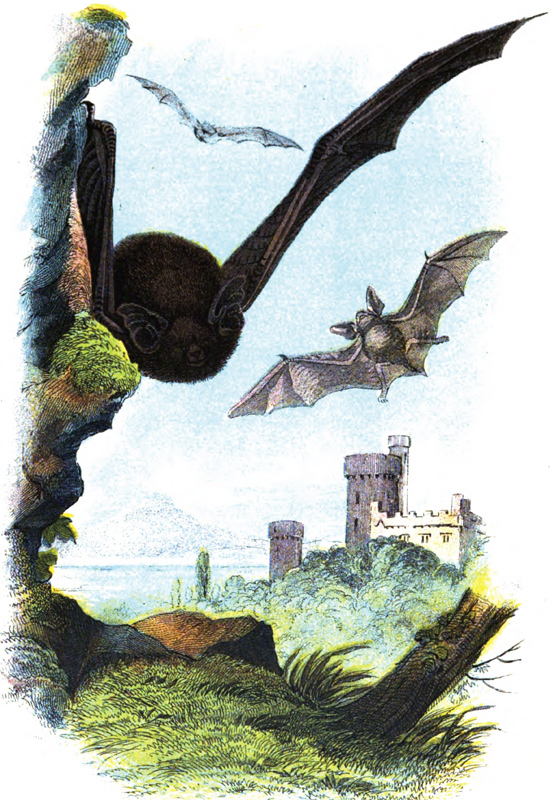 common-bats-flying-in-air.jpg