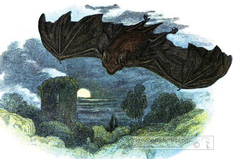 flying-greater-horseshoe-bat-illustration.jpg