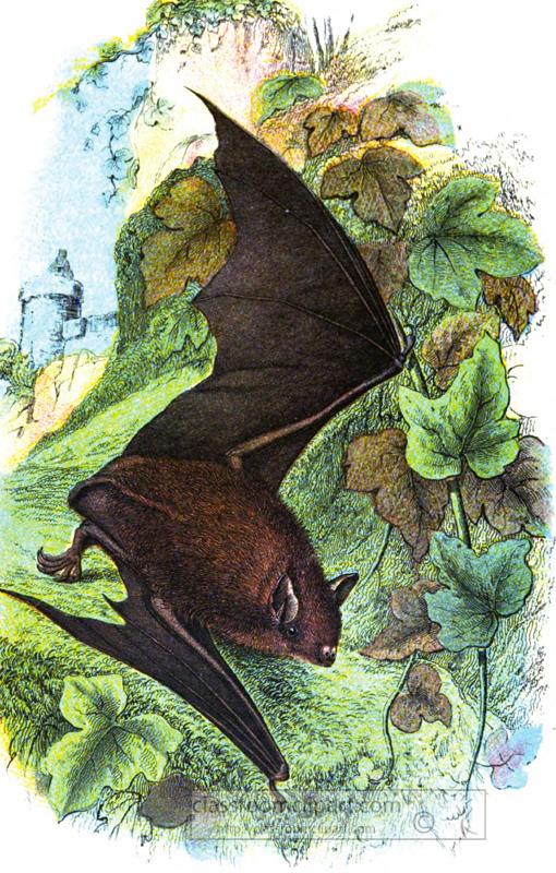 redish-bat-near-green-vines-illustration.jpg