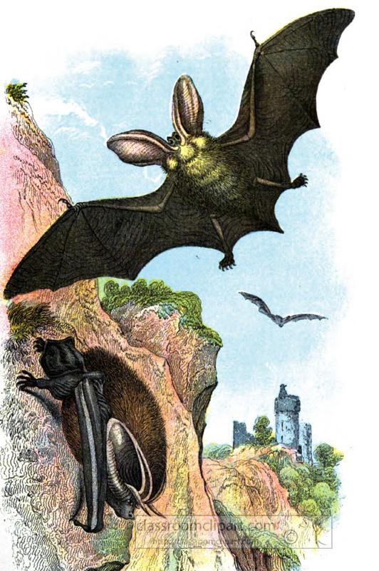two-long-eared-bats-illustration.jpg