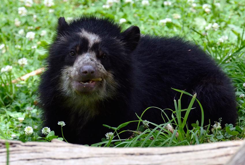 bear_cub_9391b.jpg