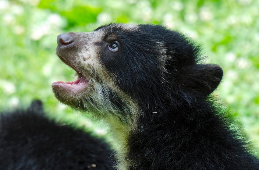 bear_cub_9402b.jpg