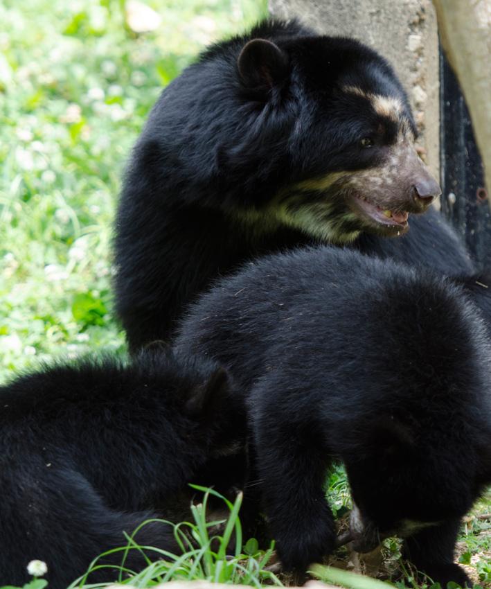 bear_cub_9427A.jpg