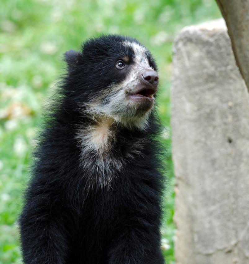 bear_cub_9480a.jpg