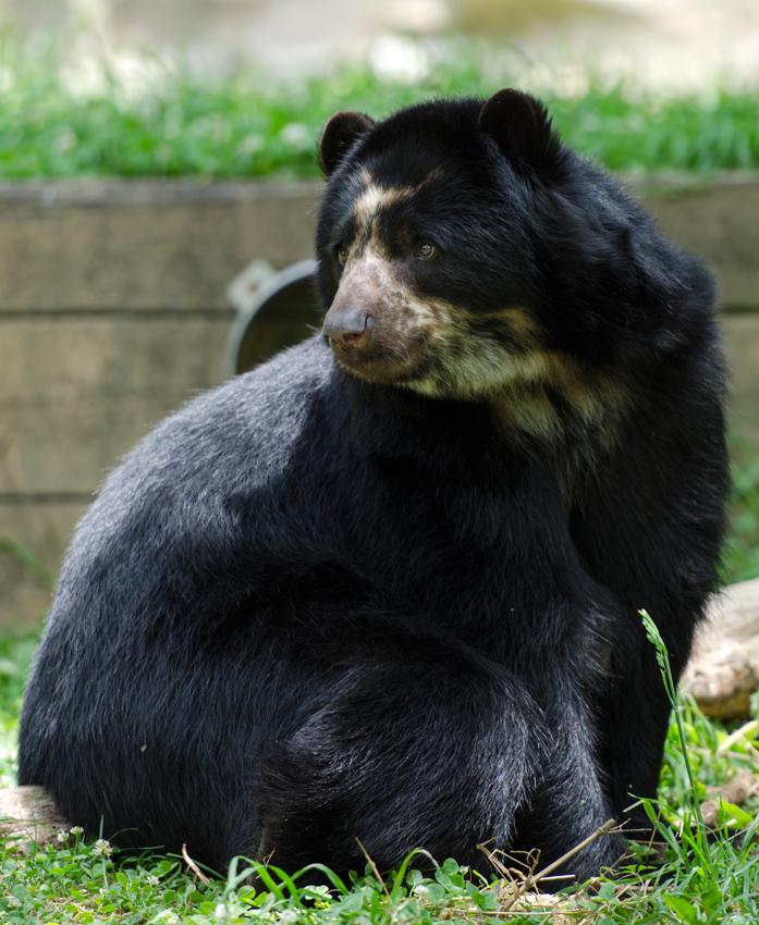 bear_cub_9551a.jpg