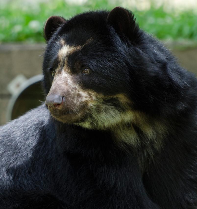 bear_cub_9551b.jpg
