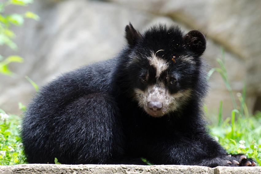 bear_cub_9578-jigsaw.jpg