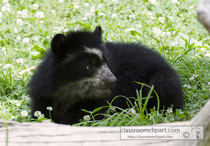 bear_cub_side_view1.jpg