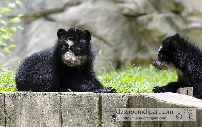 two_bear_cub_9582a.jpg